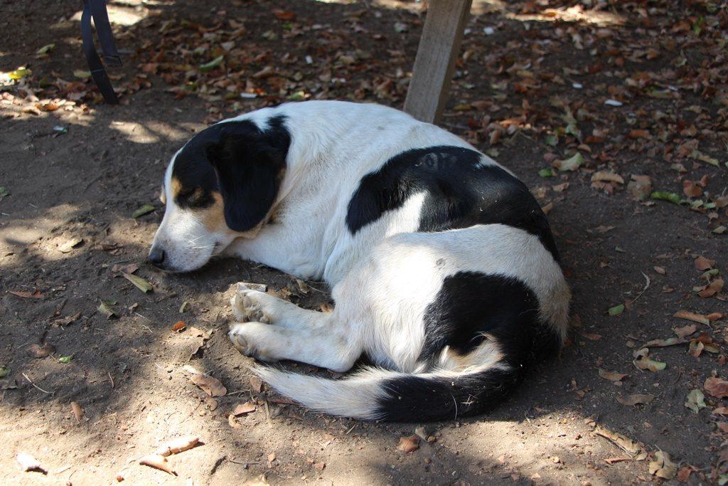 Treue Seele - unser Wachhund für eine Nacht