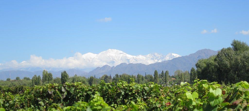 Weinfelder Mendoza