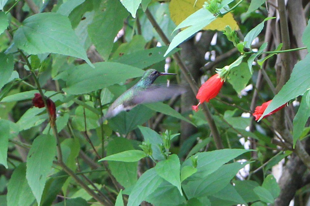 Kolibri auf Besuch bei Tonys Campingplatz