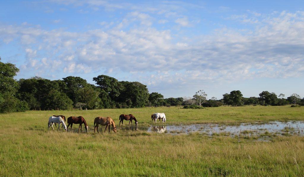 Pantanal - Fazenda Santa Clara
