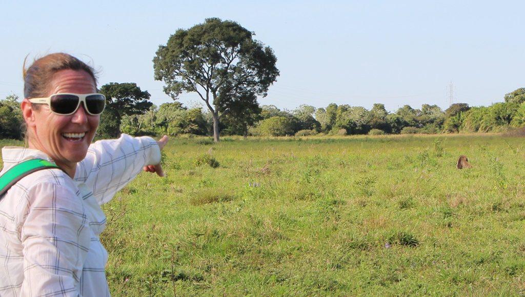Pantanal - Ameisenbär in Sicht