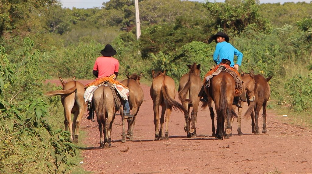 Pantanal - Gauchos