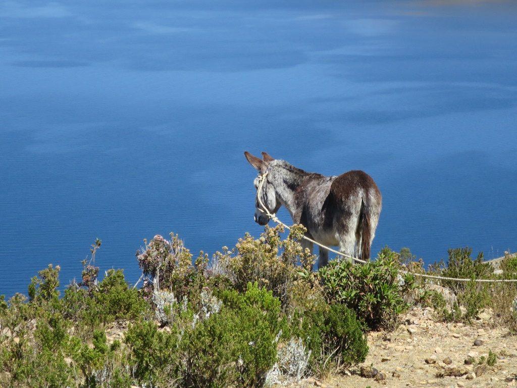 Titicacasee - Isla del Sol