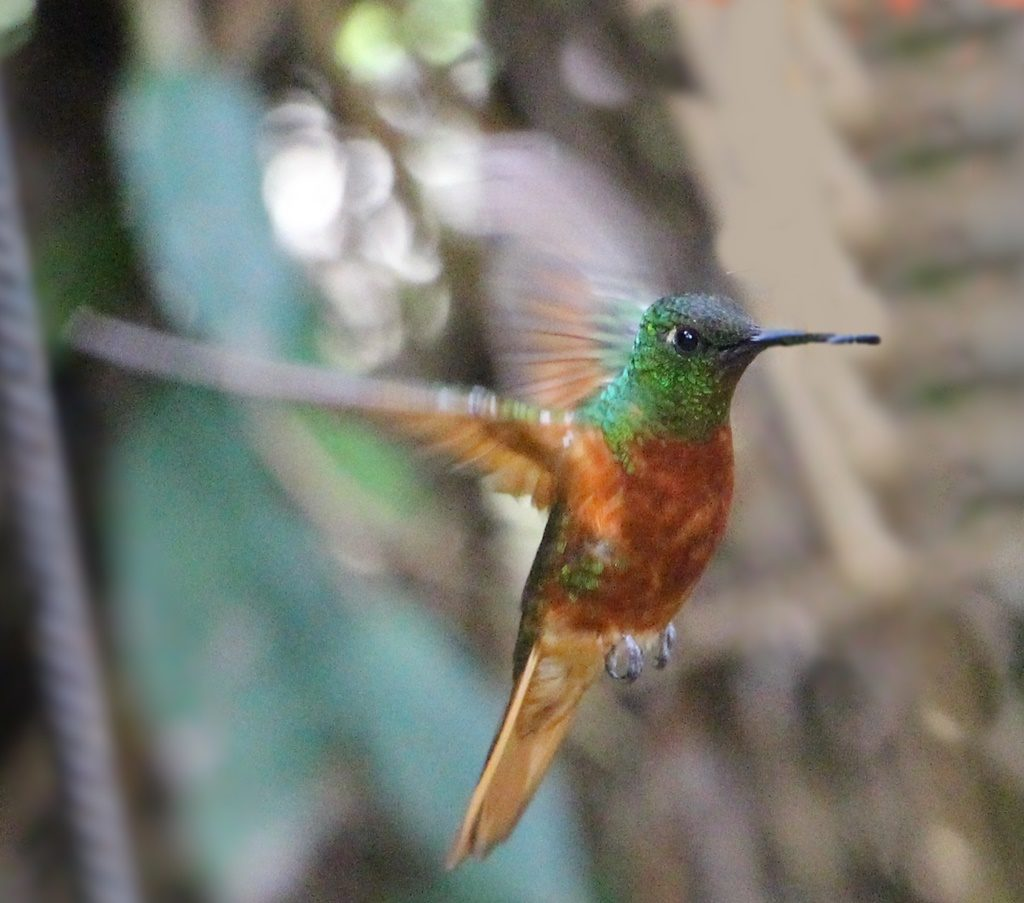 Kolibri-Reservat