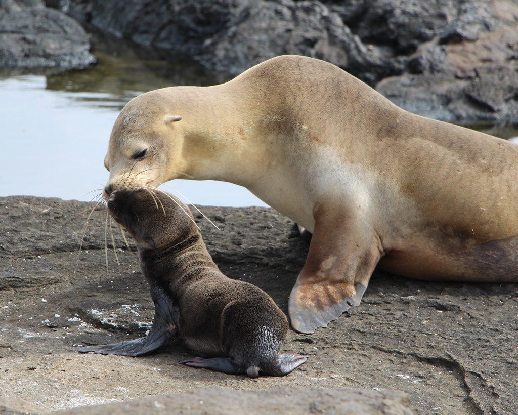 Kuschelzeit bei den Seelöwen