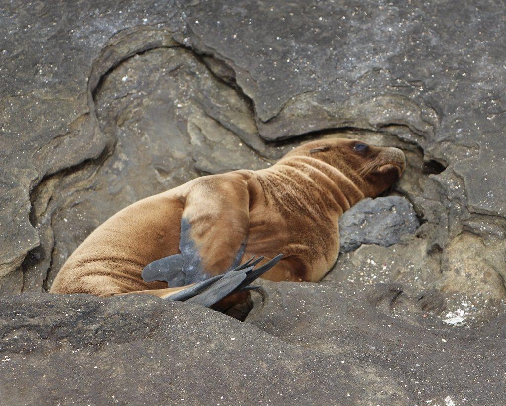 Seelöwen schlafen überall