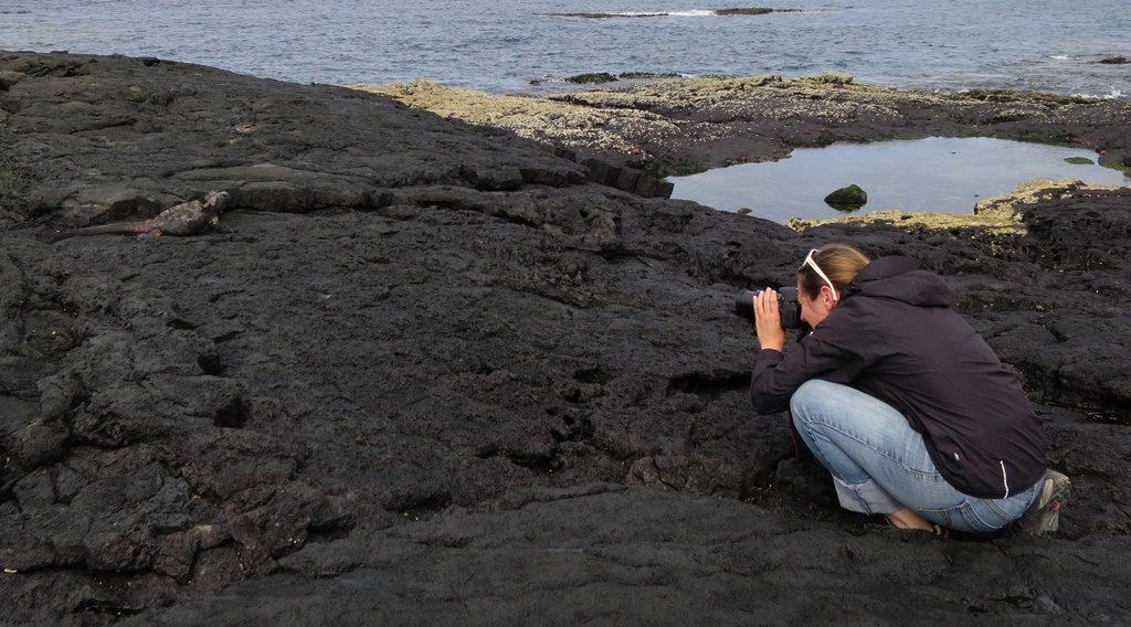 Iguana Marina vor der Linse