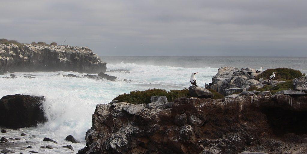 Isla Española / Punta Suàrez