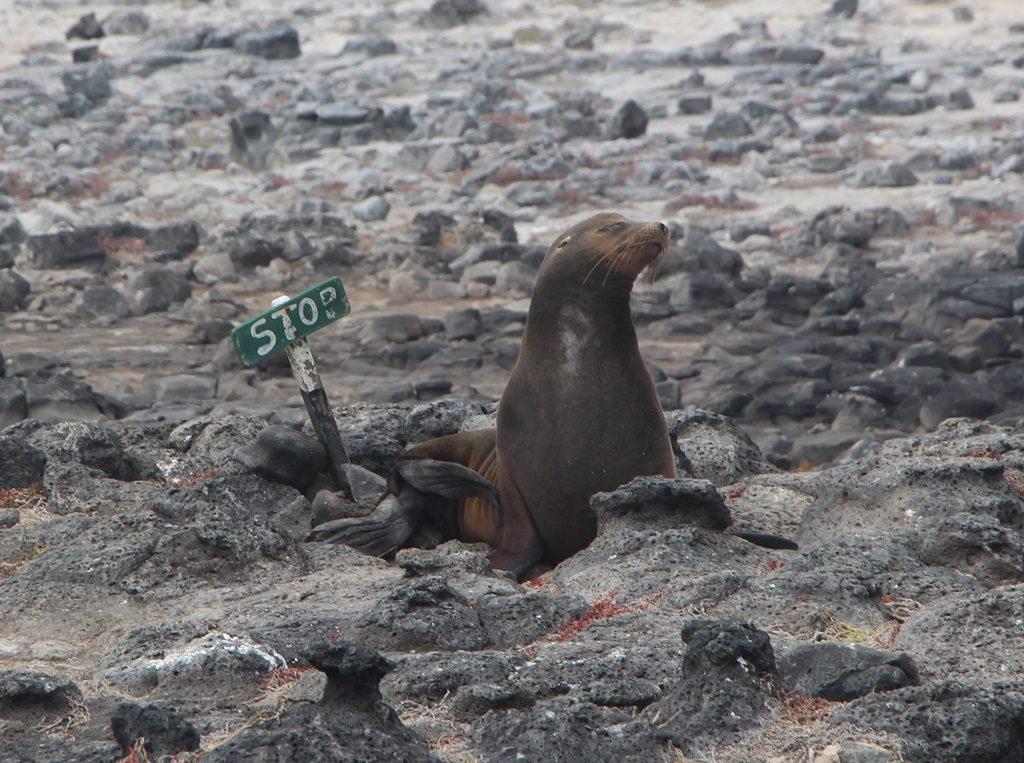 Der Seelöwe zeigt uns wie weit wir gehen dürfen