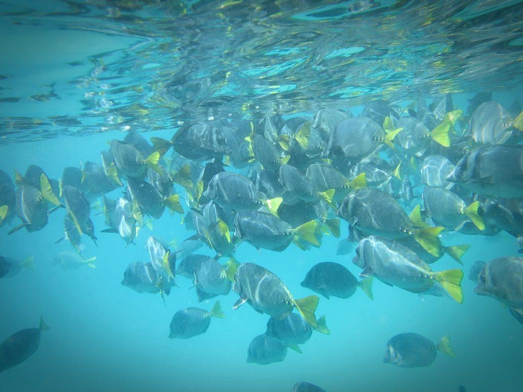farbenfroher Fischschwarm