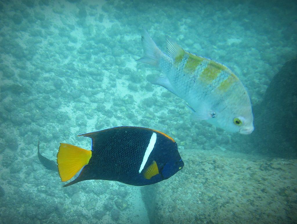 farbenfrohe Fische unter Wasser