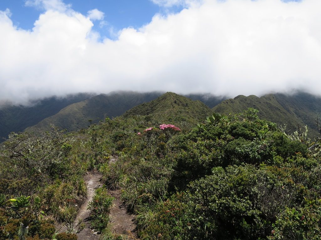 Podocarpus Natioanlpark