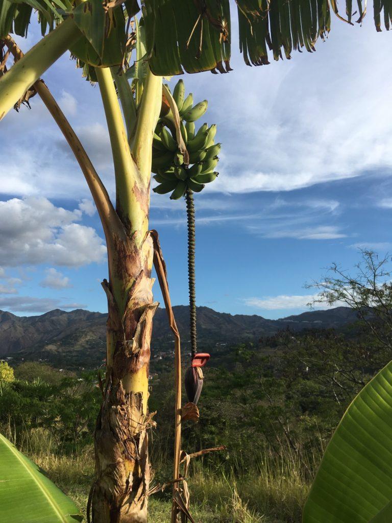 Bananen so weit das Auge reicht in Vilcabamba