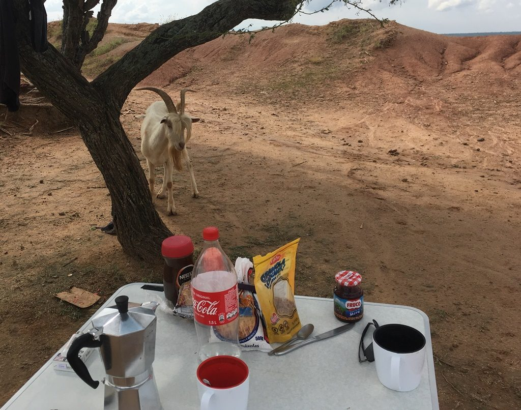 Geissbock Langbart im Desierto Tatacoa